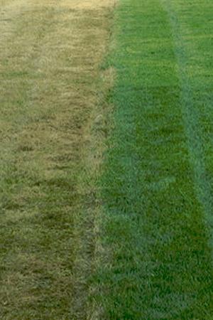 Dethatching Lawn Services Regina