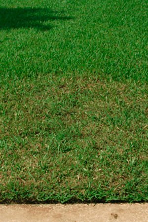 Killing Lawn Insects Bugs Regina